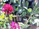 Растительный мир Прииссыккулья